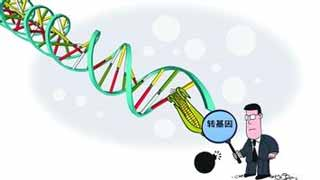 人类食物演化:天择、化肥及转基因