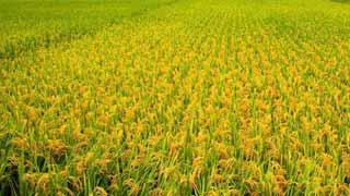 """张文茂:我国三农领域的三大理论流派及分歧——关于""""三农""""理论和政策问题的部分谈话记录"""