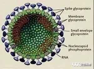 金微:石正丽,你的人造病毒去哪了?