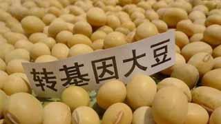 """大北农公司宣布""""转基因大豆出口转内销了""""!"""